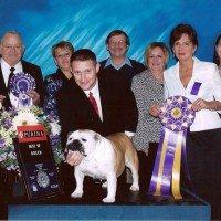 Award Winning Showdogs