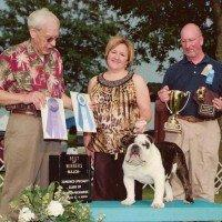 Award winning bulldog Jimi